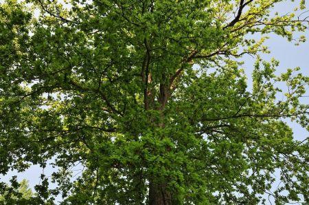 A l'orée du bois Saint-Michel