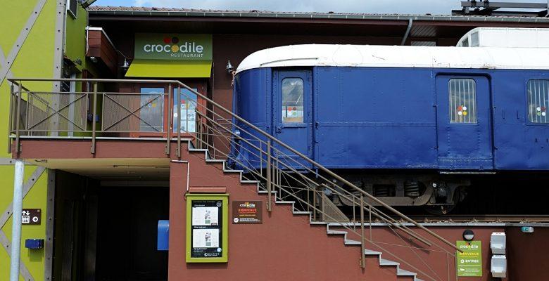 Crocodile - Copyright : crocodile