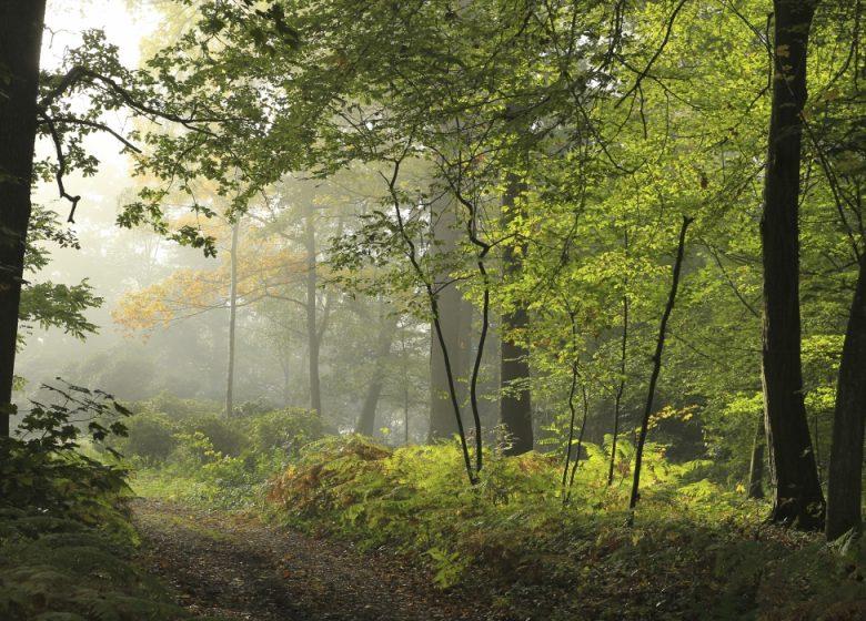 Le massif des trois forêts